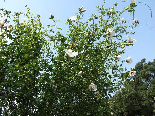 2008_0705touji0049s.JPG