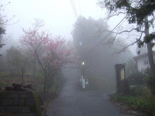 2008_0413miyanasansou0011s.JPG