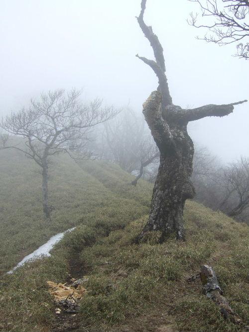 2008_0413miyanasansou0146s.JPG