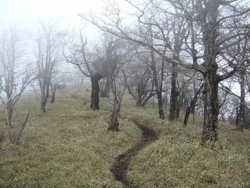 2008_0413miyanasansou0149s.JPG